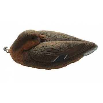 Чучело кряквы спящей  (утка) 7321